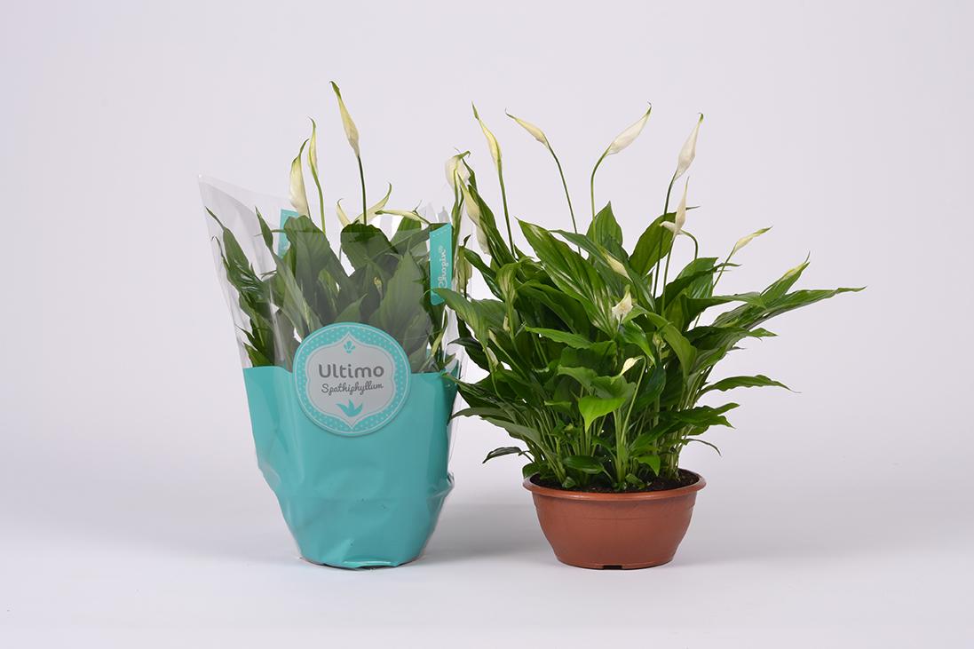 Productfotografie vd Voort Potplanten